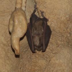 Gotta dei 5 Laghi - pipistrello - foto di Marco Allegrezza (@marco.allegrezza.18)