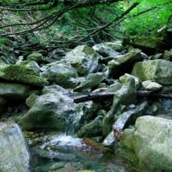 Dettaglio del torrente
